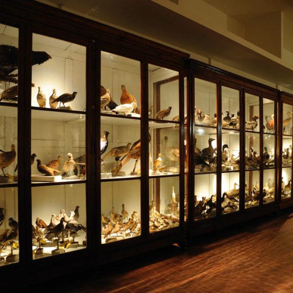 Galleria di Storia Naturale dell'Università degli Studi di Perugia